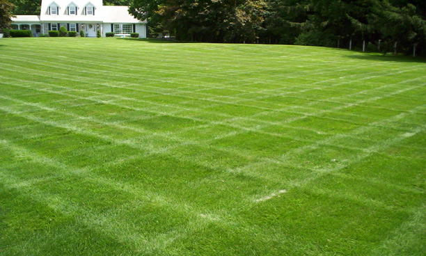 New Jersey Lawn Care and Lawn Mainteneance Companies