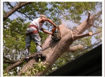 Residential and commercial trimming and tree removal services in New Jersey