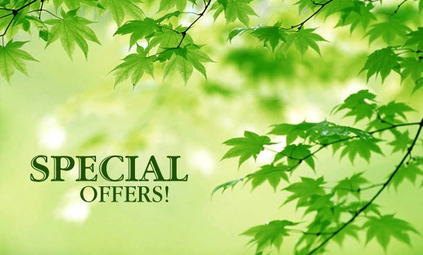 Special offers for Lawn Mowing and Landscaping Services